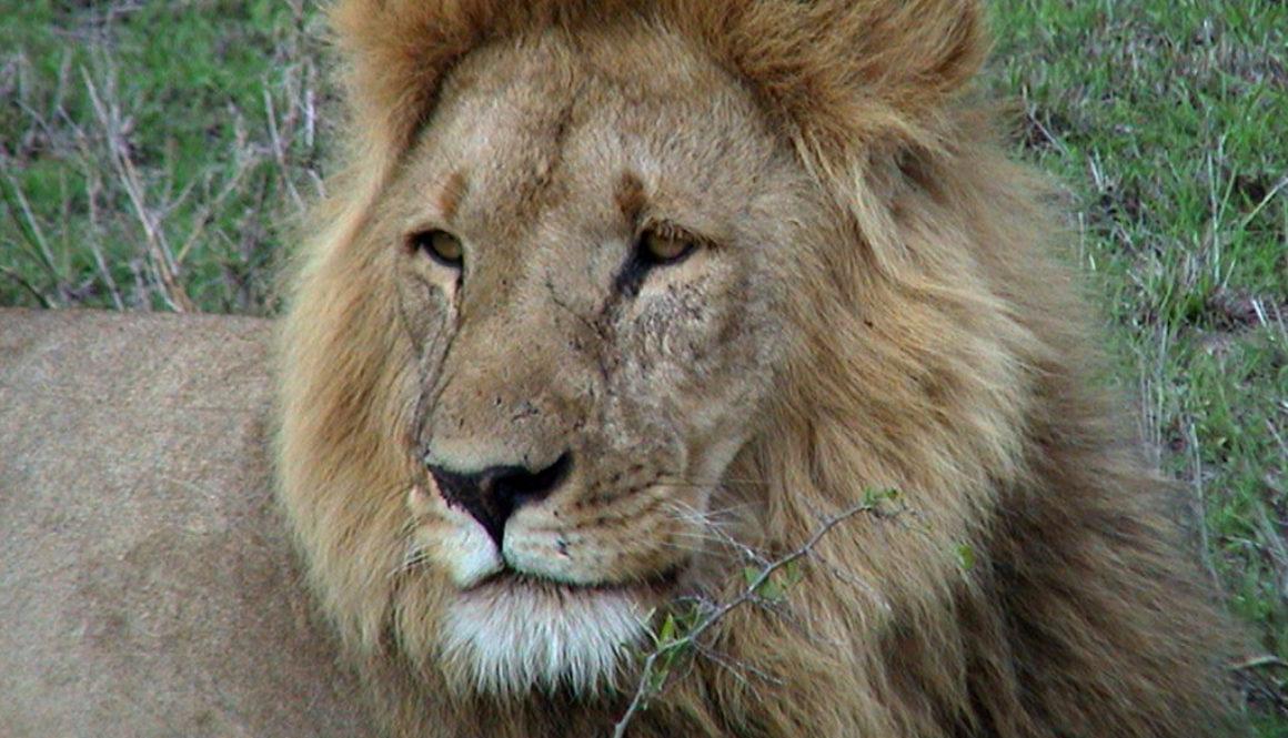 Kenya 2000
