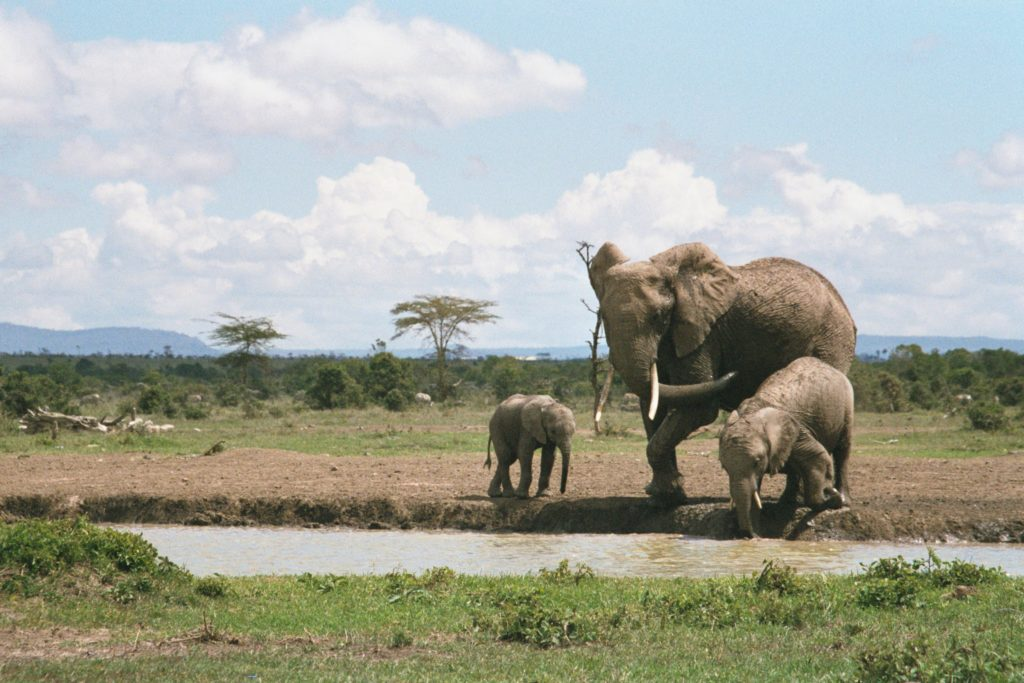 Mommy brings her kids for a drink of water in Sweet water Camp's waterhole.