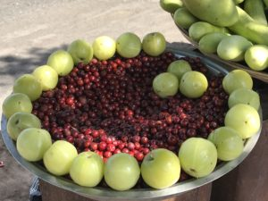 Mouthwateringly sour and fresh gooseberries, sweet berries and crunchy cucumbers for hiking in Sinhagad fort.