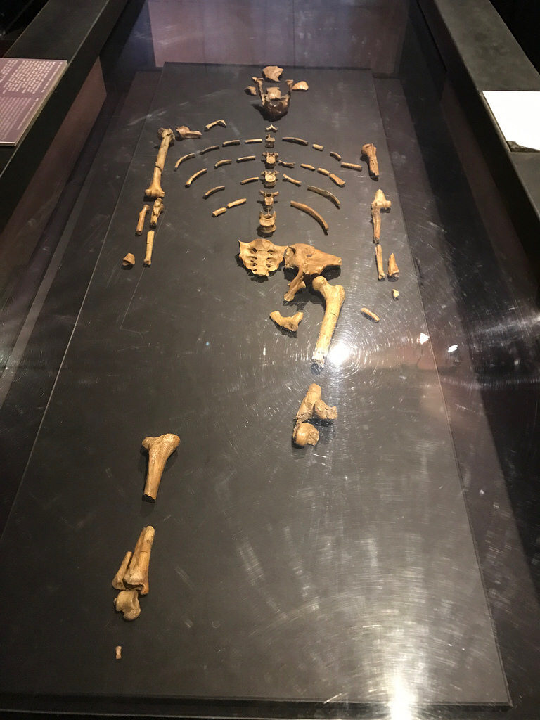 3.2 million year old fossils of the human ancestor, Dinkinesh, or knows as Lucy in the western world. Addis Ababa National Museum