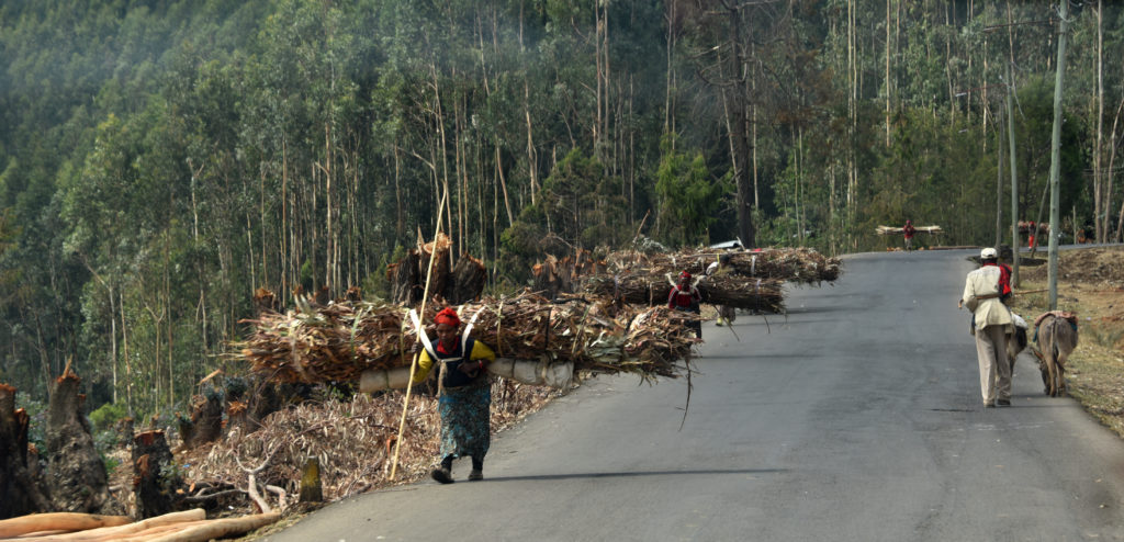 Road up to Mount Entoto: People carrying collected wood on their backs. Addis Ababa