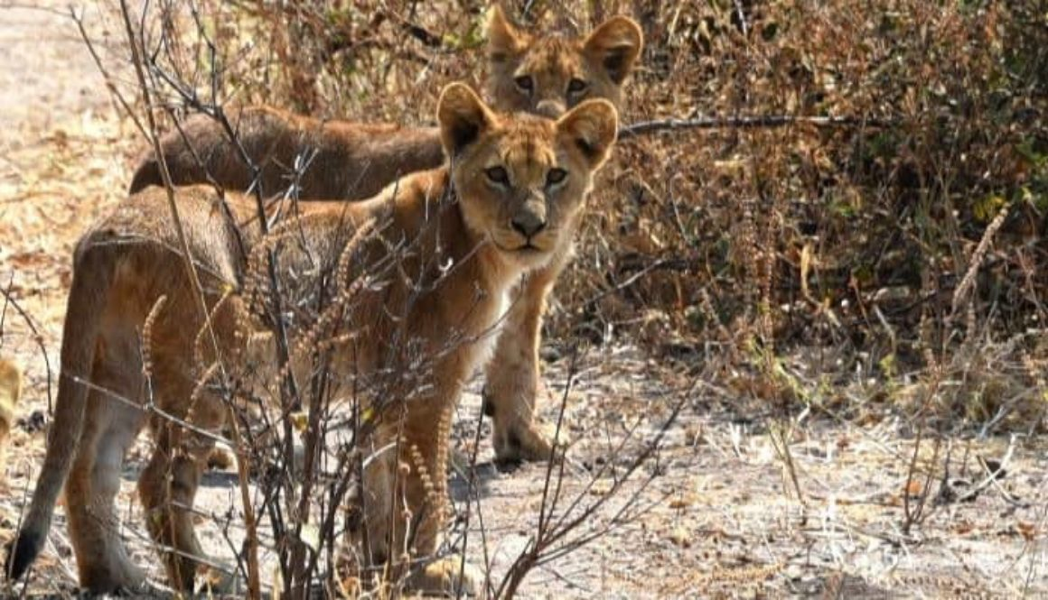 Kruger_and_Chobe-699x399