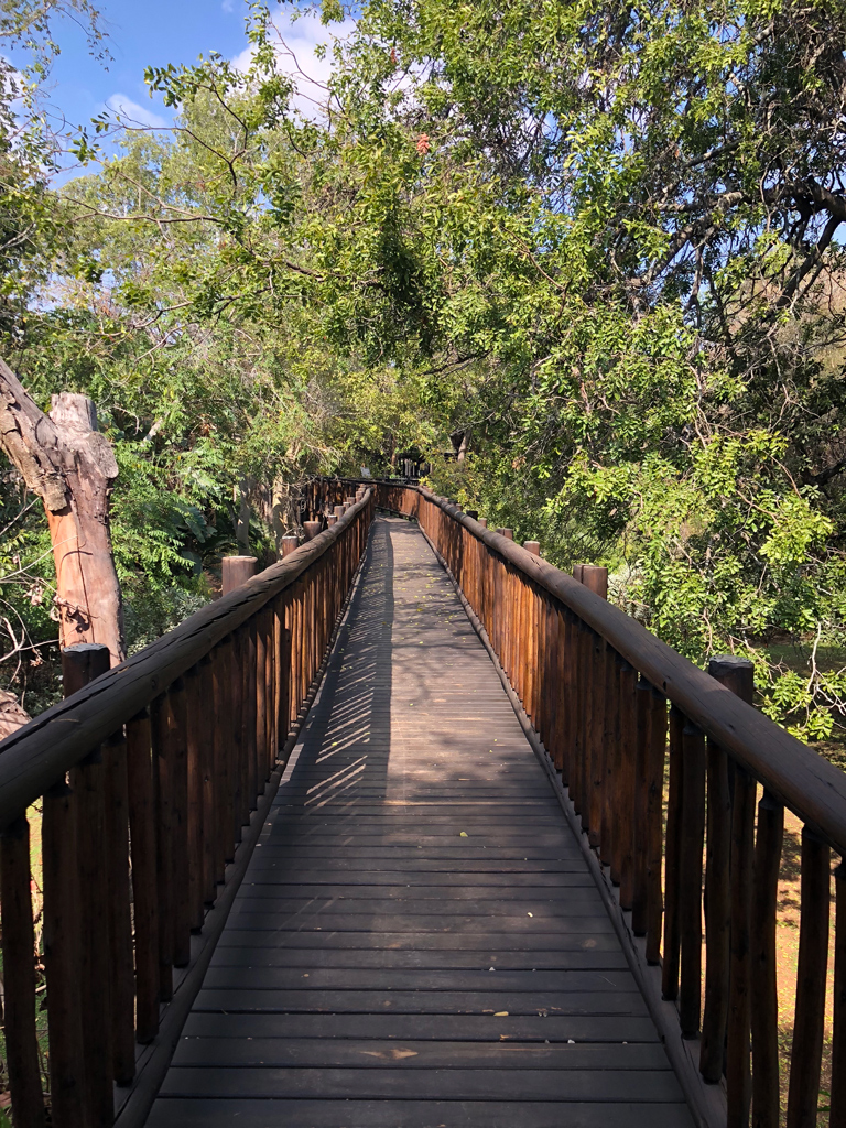 Another reason Protea hotel is one of the best places to stay by Kruger national park is the beautiful walkways through the trees. It's common to see wildlife beneath the walkways.