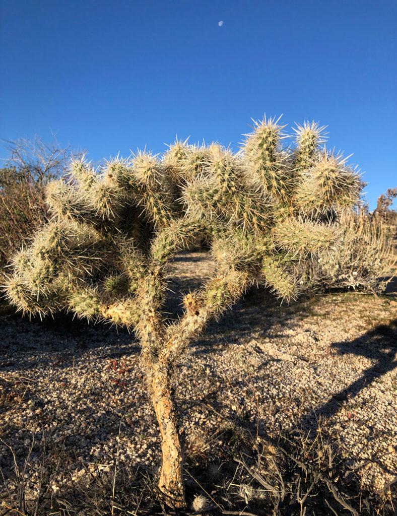 A thorny cactus!