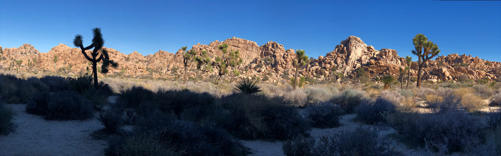 Central part of Hidden Valley has more arid vegetation that evolved and adapted to the changing climate.