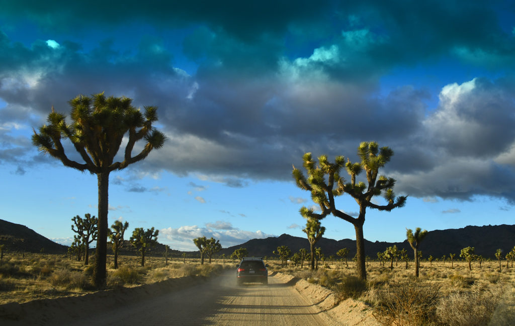 Big Horn Pass, a scenic dirt road to Barker Dam in Joshua Tree national Park.
