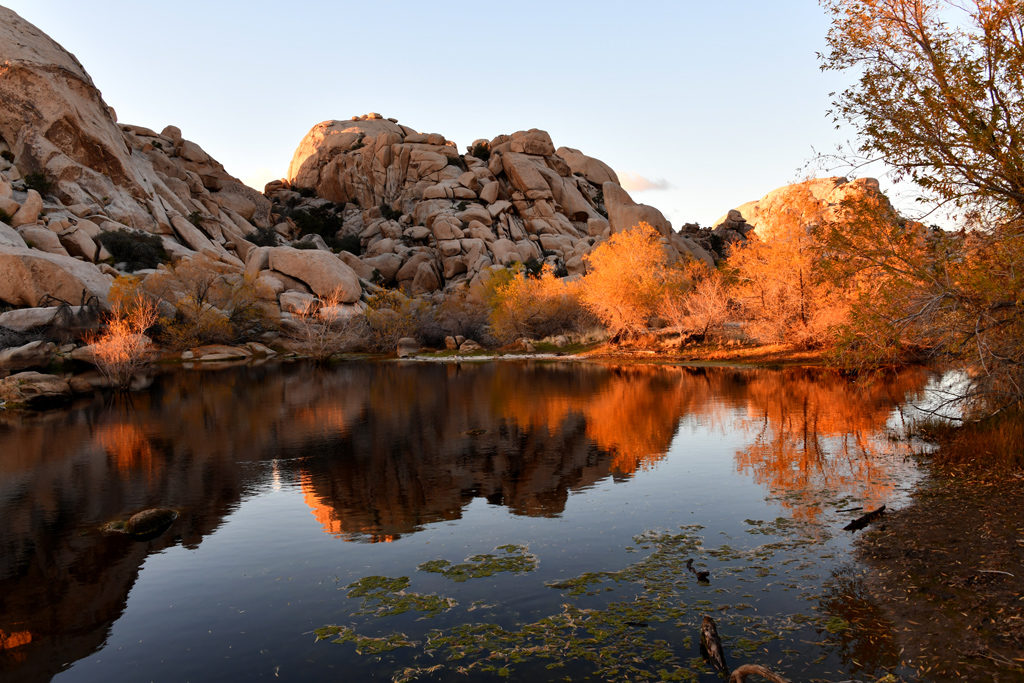 How To Visit Joshua Tree National Park In 1 Or 2 Days The