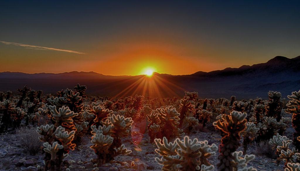 Joshua Tree National Park - Cholla Cactus Garden