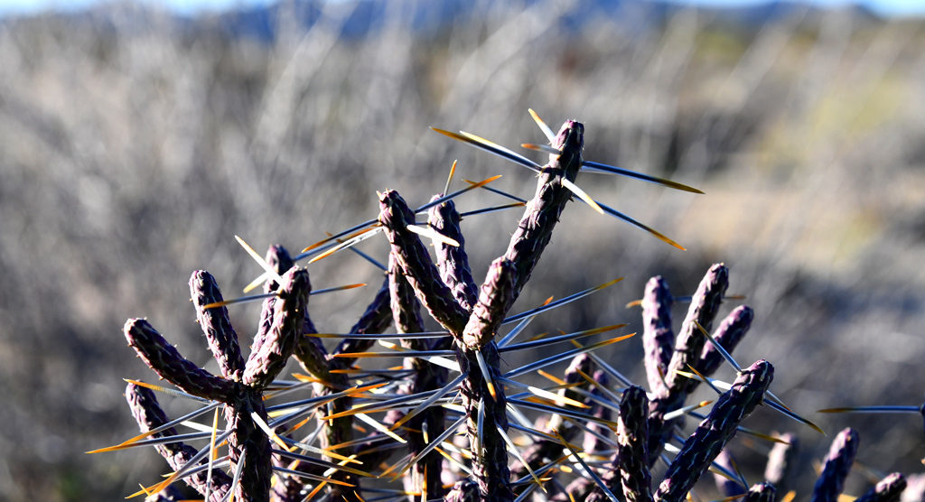 The bush in the fore ground in the above picture has huge thorns to be wary of.