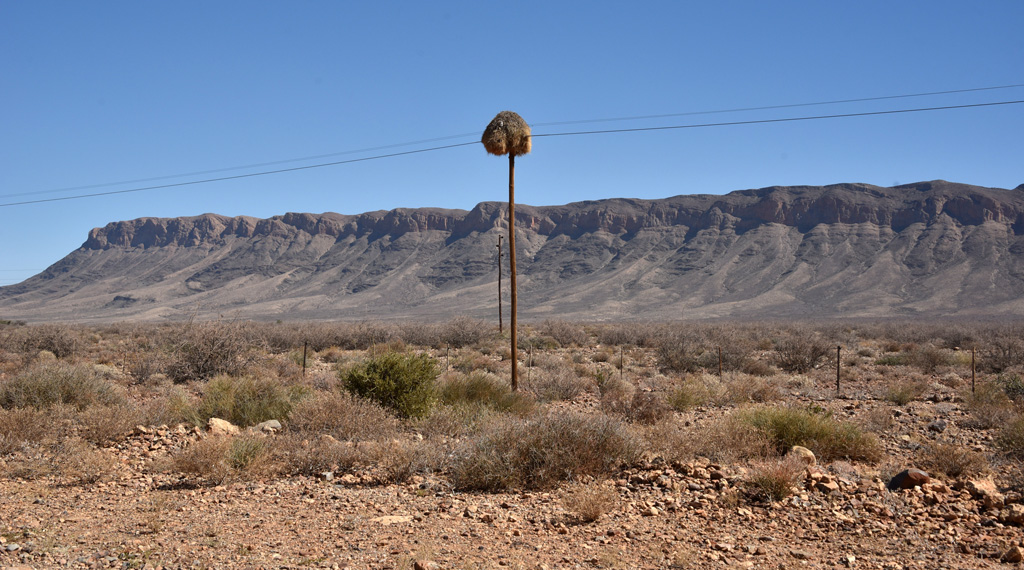 We wondered why there were piles of hay on electric poles in the arid deserts of Namibia.