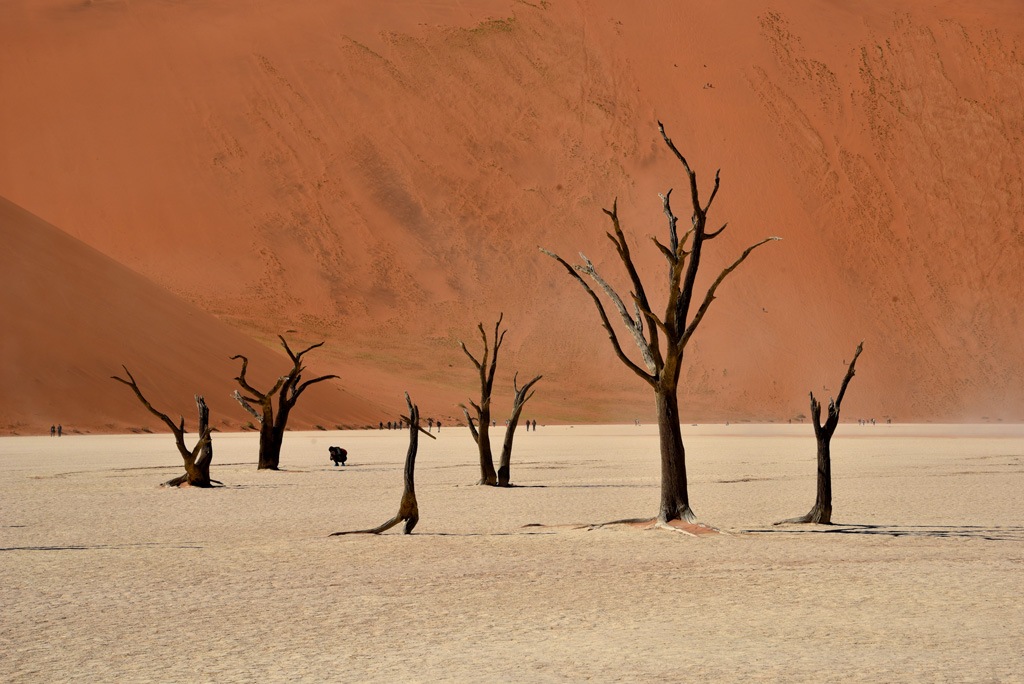 Trees in Deadvlei make gorgeous picture props.