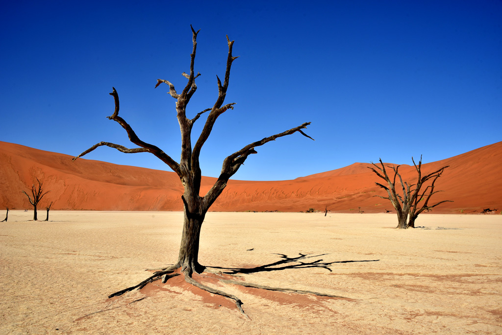 Trees in Deadvlei now form out-of-this-world shots. They are featured in many movies.