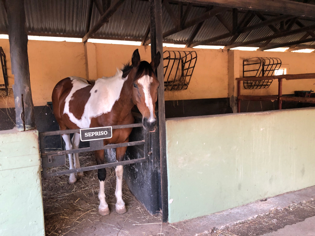 A typical stall in Victoria Falls Horse Safari Stables in Livingston, Zambia.