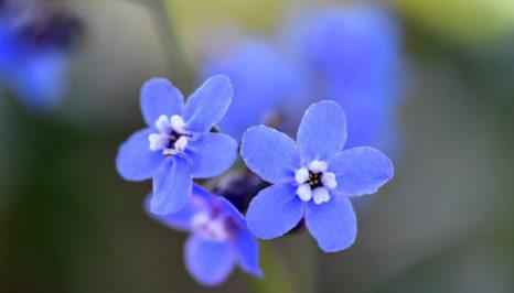 Henry Coe State Park Spring bloom
