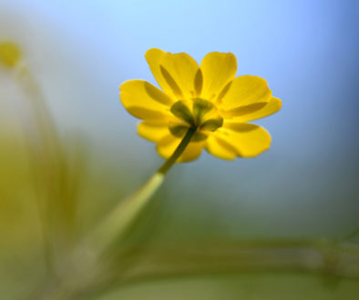 yellow-wildflower-1165x665